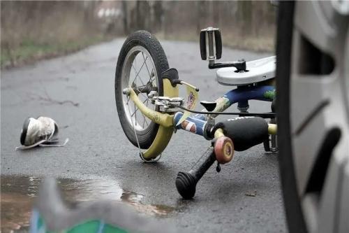 骑电动车的人为避让宠物狗摔伤,需自行担责70%